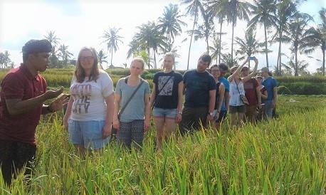 Rice Paddy Trekking